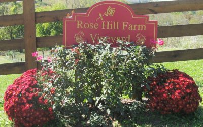 2pm to 9pm – Rose Hill Winery